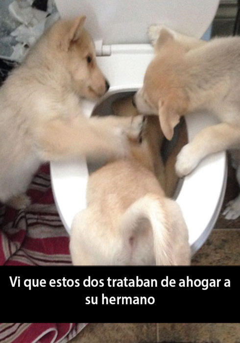 Snapchat de un perro siendo ahogado por otros dos