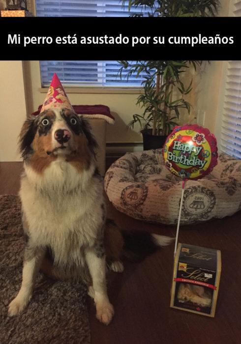 Snapchat de un perro celebrando su cumpleaños