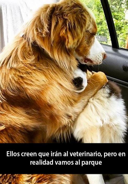 Snapchat de un perro abrazando a otro dentro de un carro