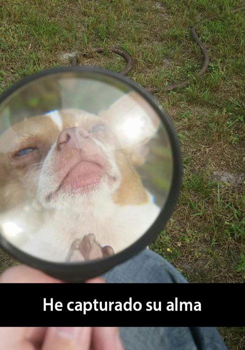 Snapchat de un perro con una lupa delante de su cara
