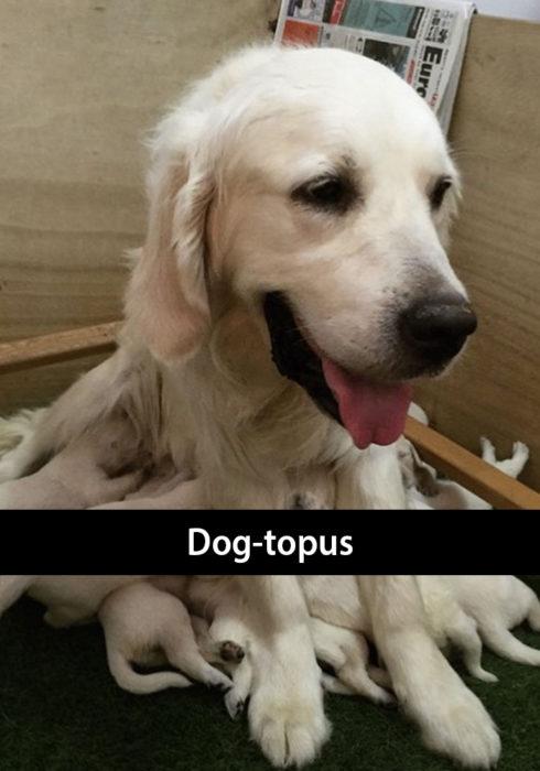 Snapchat de un perro alimentando a sus cachorros