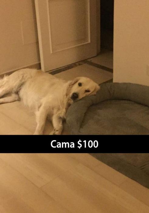 Snapchat de un perro recostado a un lado de su cama