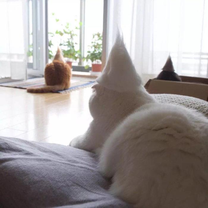 gato blanco con gorro blanco