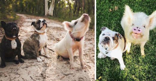 Esta pareja adoptó una cerdita y ahora ella cree que es un perro