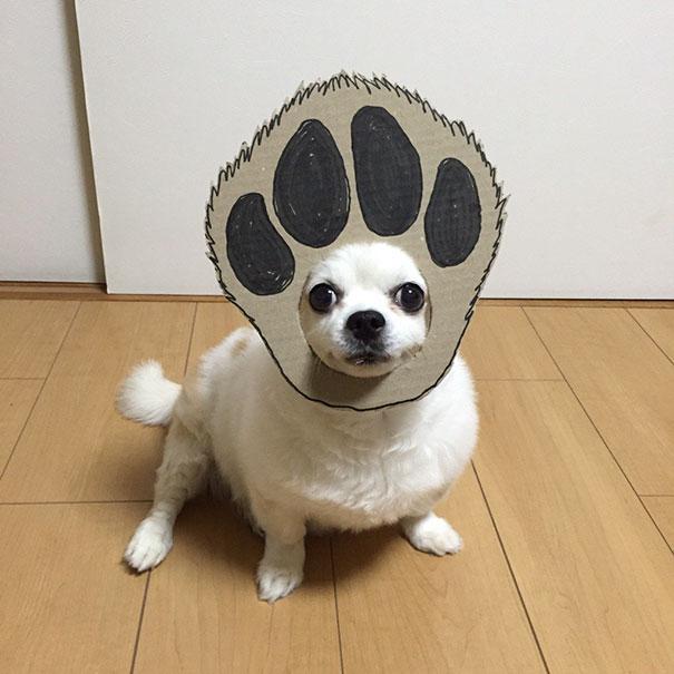 Perro chihuahua con una mascara de cartón en forma de huella de perro