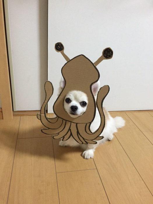 Perro chihuahua con una mascara de cartón en forma de calamar