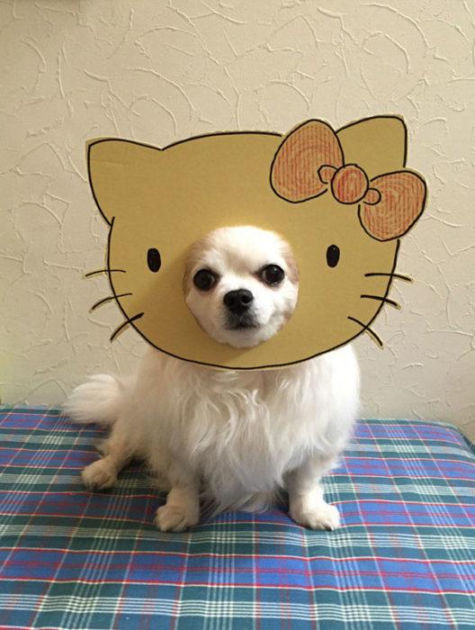 Perro chihuahua con una mascara de cartón en forma de hello kitty