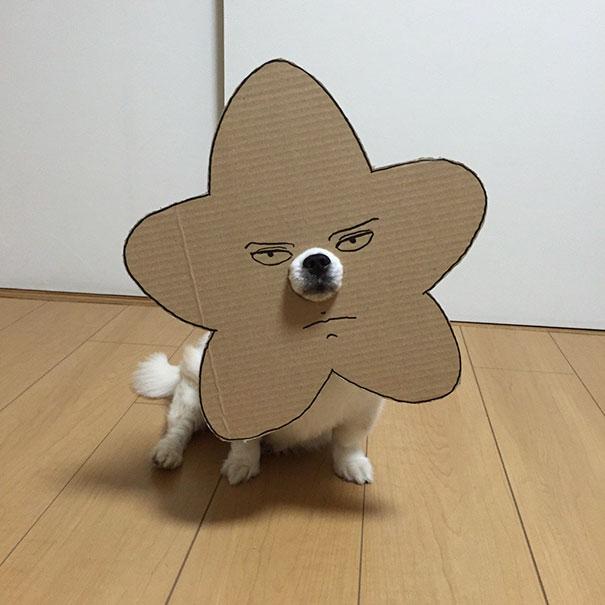 Perro chihuahua con una mascara de cartón en forma de estrella enojada
