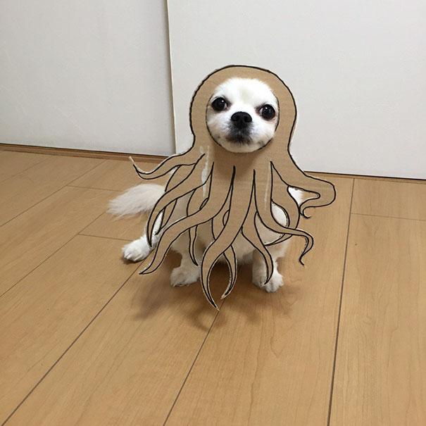 Perro chihuahua con una mascara de cartón en forma de kraken