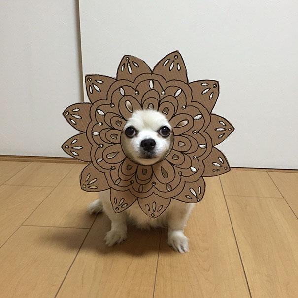 Perro chihuahua con una mascara de cartón en forma de mandala