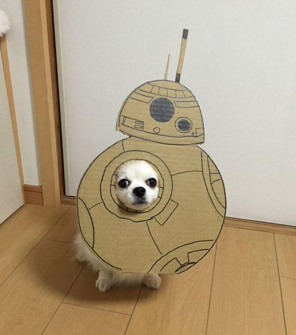Perro chihuahua con una mascara de cartón en forma de bb8