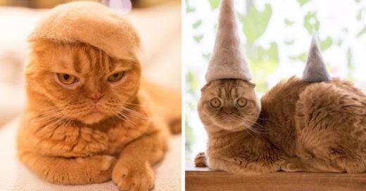 Él diseña pequeños sombreros hechos del pelaje de sus gatos y son lo más chic que verás