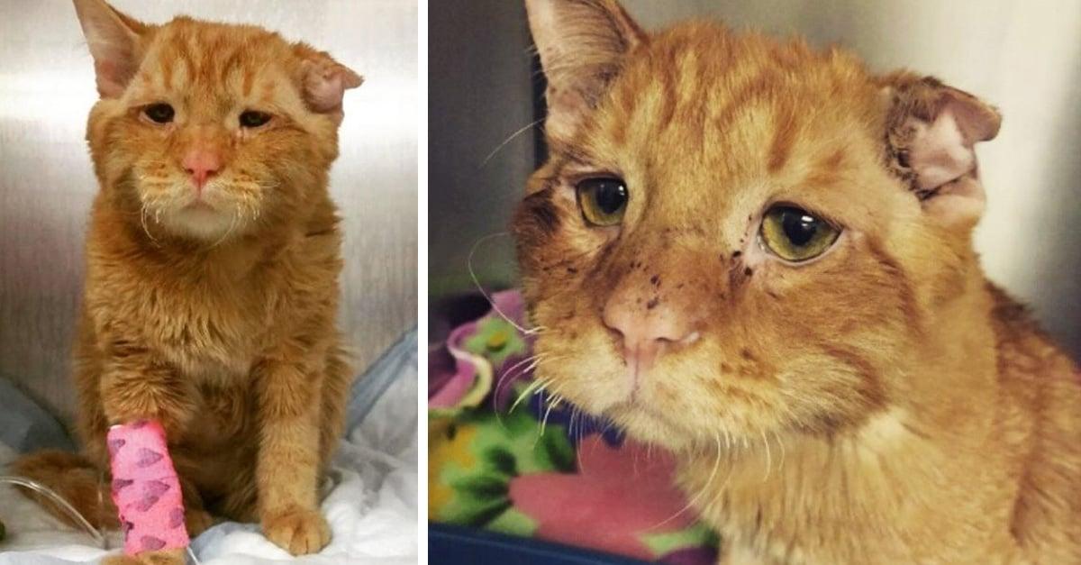 El semblante del gato más triste del mundo cambió una hora después de su adopción
