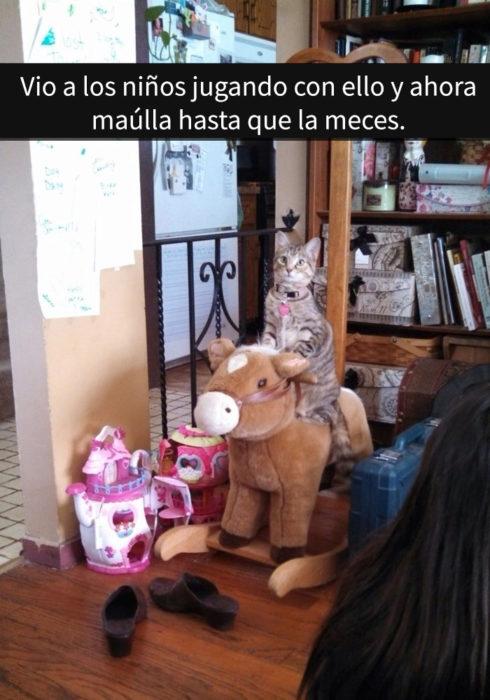 gatos-snapchat-1