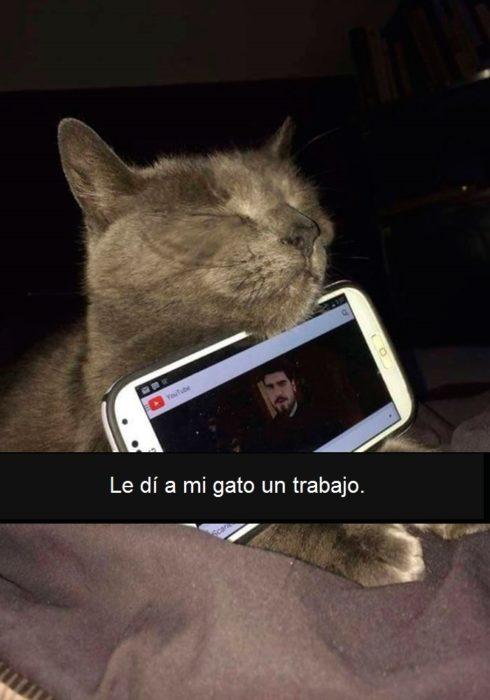 gato con celular