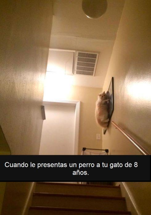 gato asustado