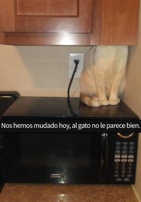 gato nervioso