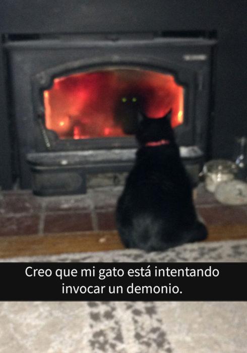 gato chimenea