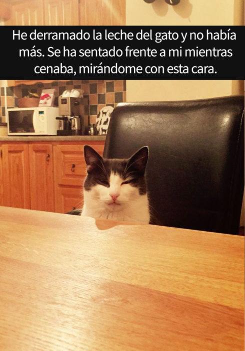 gato molesto
