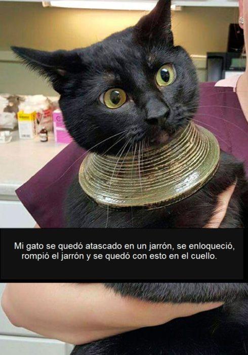gato en apuros
