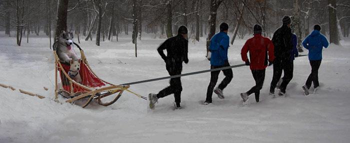 hombres halando trineo con perros husky