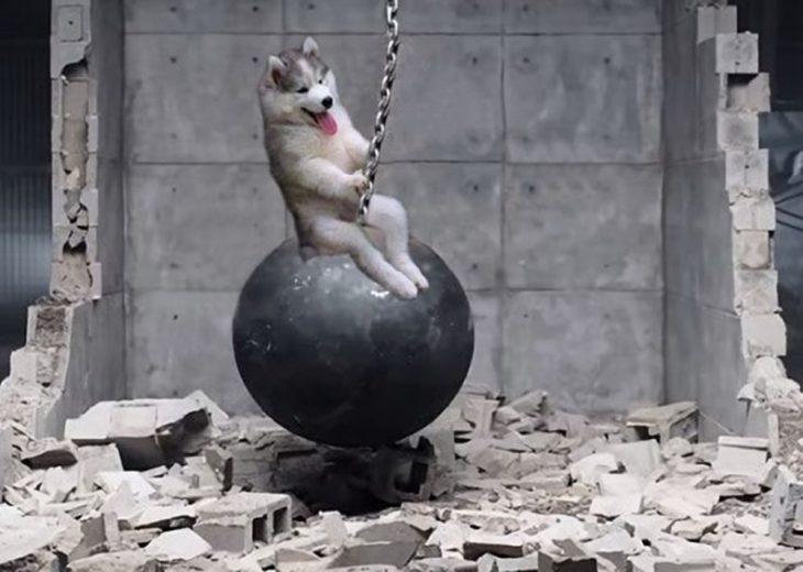 perro sobre bola de demolicion