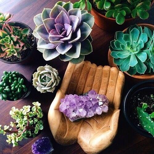Macetas con plantas suculentas