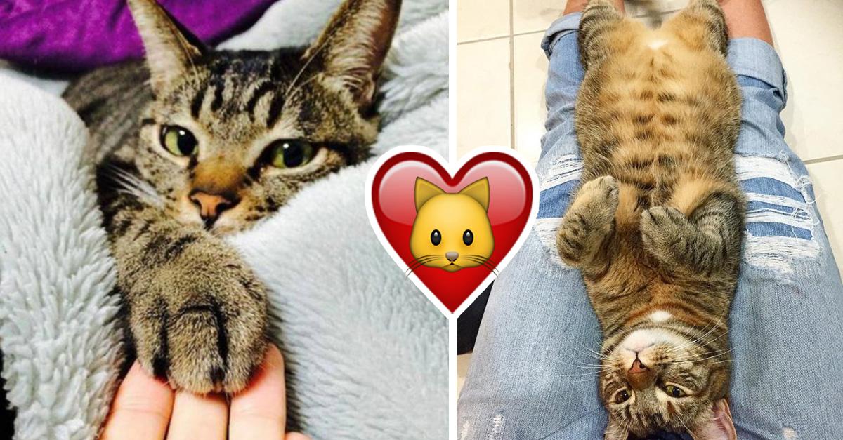 15 sentimientos extraños que sólo las dueñas de un gato podrán entender
