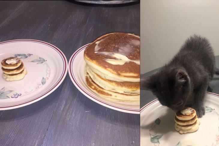 panqueques grandes y pequeños con gato comiendo