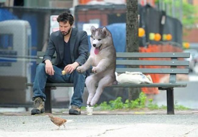 hombre y perro sentados en una banca