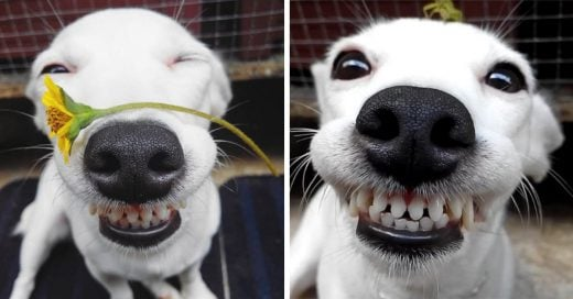 Este cachorro está derritiendo todos los corazones con su sonrisa