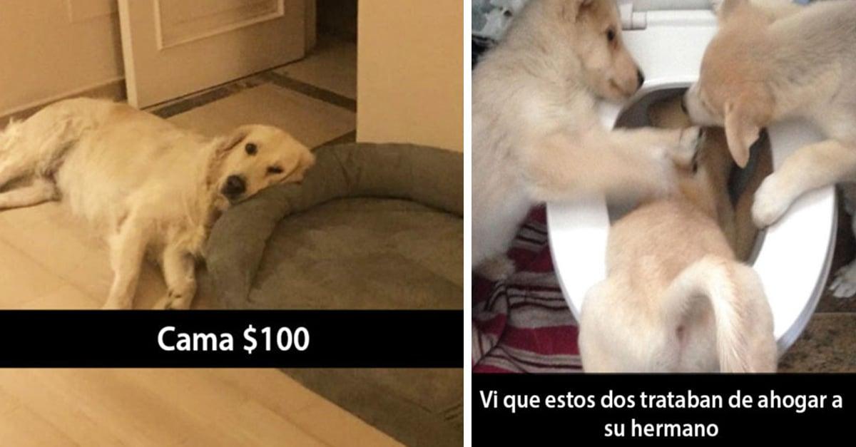 15 Snapchats de perros que te alegrarán el día