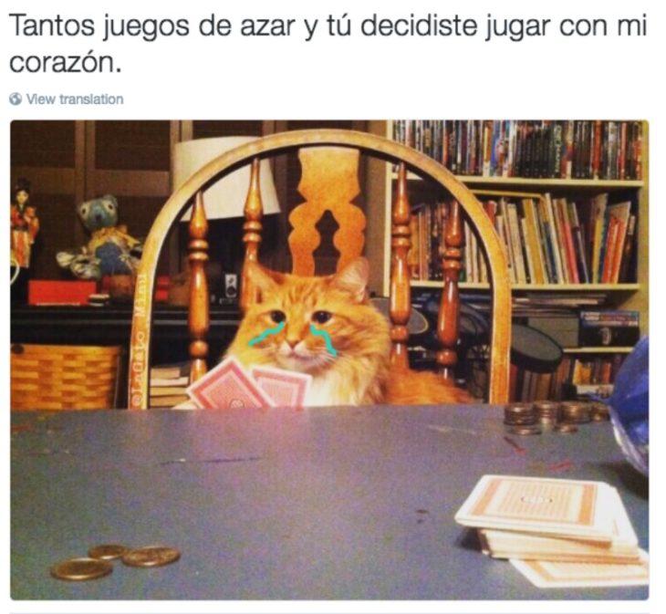 gato en mesa con barajas