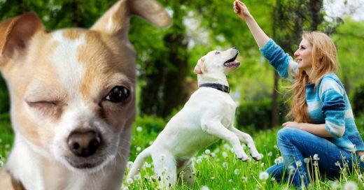5 Trucos originales que amará tu perro