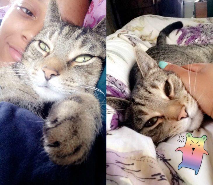 chica con gato gris en la cama
