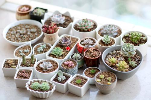 colección de plantas succulents