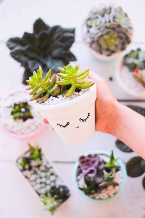 plantas succulents linda maceta