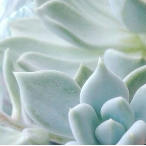 hoja de plantas succulents