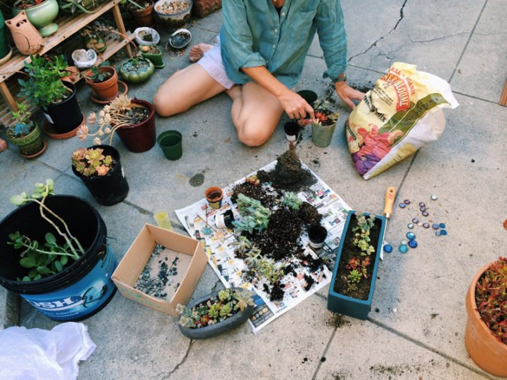chica plantando plantas succulents