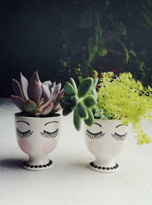 plantas succulents en macetitas