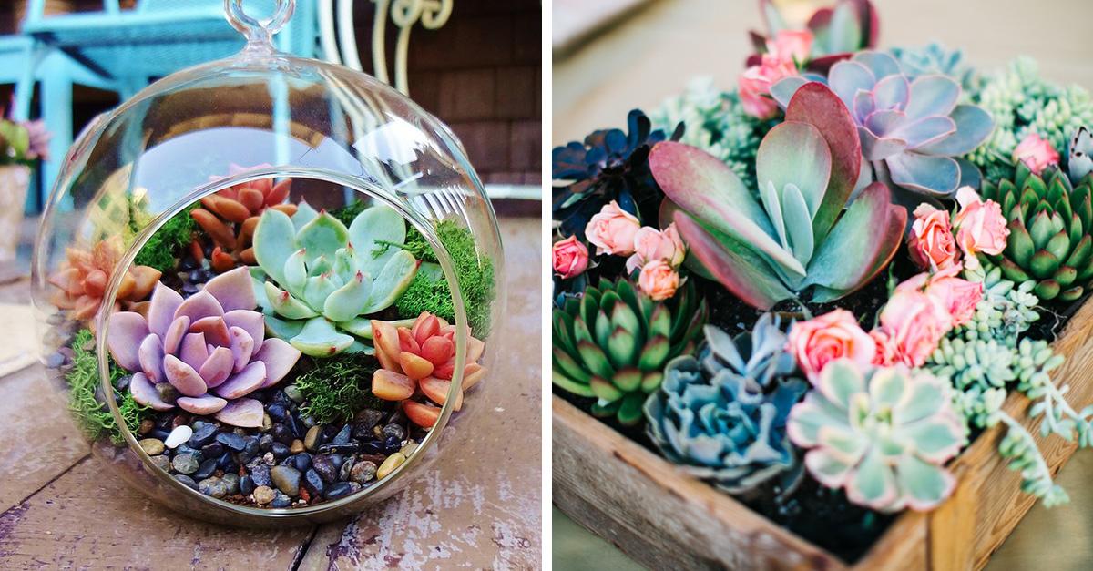 15 razones por las que deberías tener una succulents en vez de flores