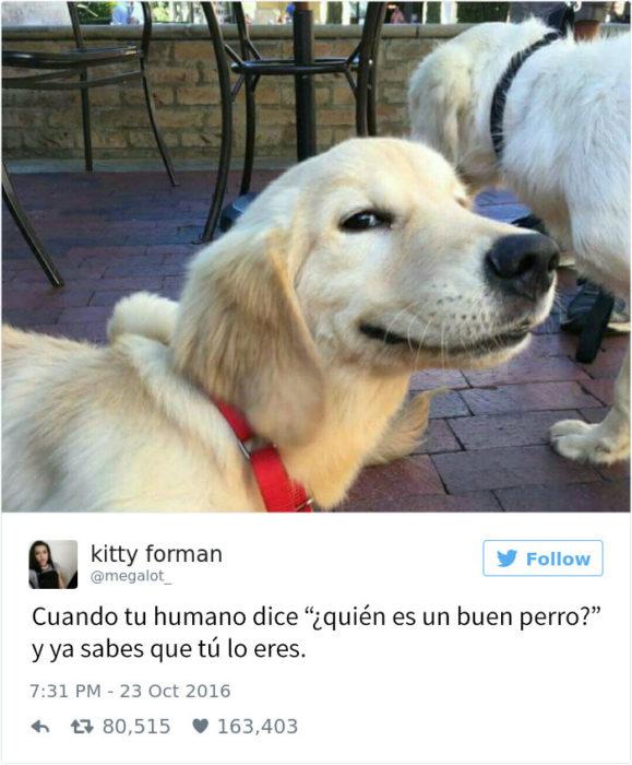 Tuit gracioso sobre perros haciendo travesuras