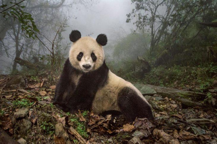 Mejor fotografía de National Geographic