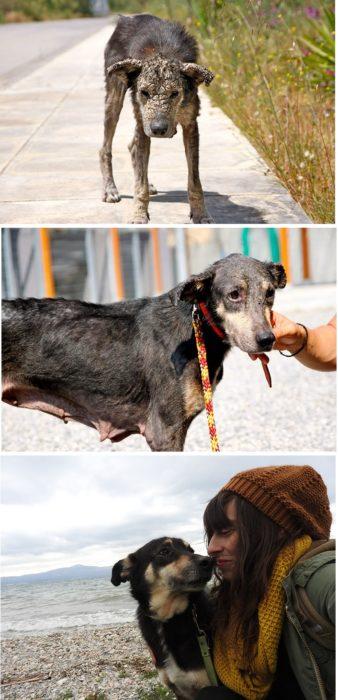 Petra el perro petrificado