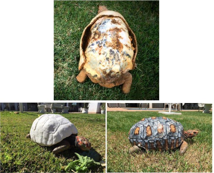 tortuga rescatada