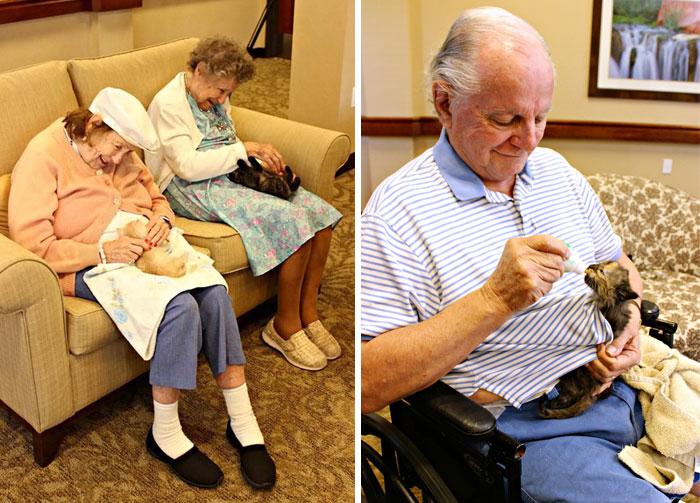 refugio para gatos y ancianos