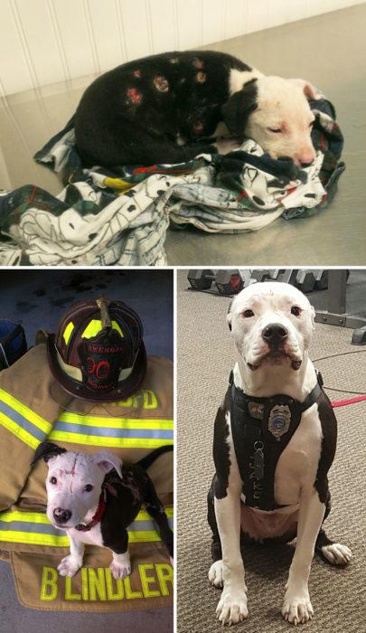 perro rescatado de incendio