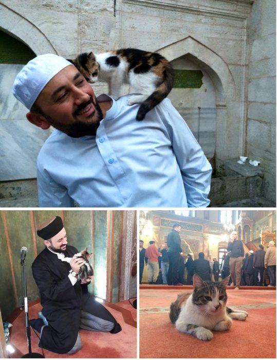 la mezquita de los gatos
