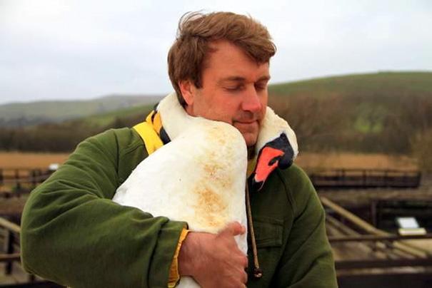 cisne agradecido