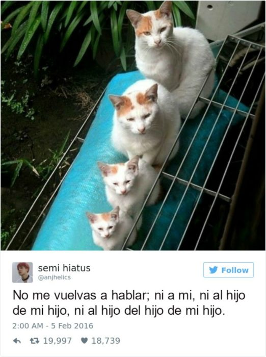 Captura de pantalla Twitter gatos pequeños al lado de un gato grande